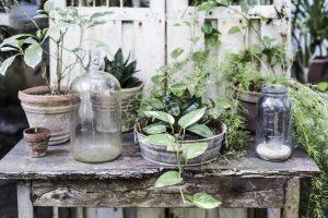 Gröna växter på bord